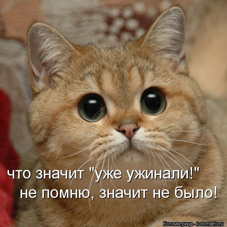 "Котоматрица: не помню, значит не было! не помню, значит не было! что значит ""уже ужинали!"" что значит ""уже ужинали!"""
