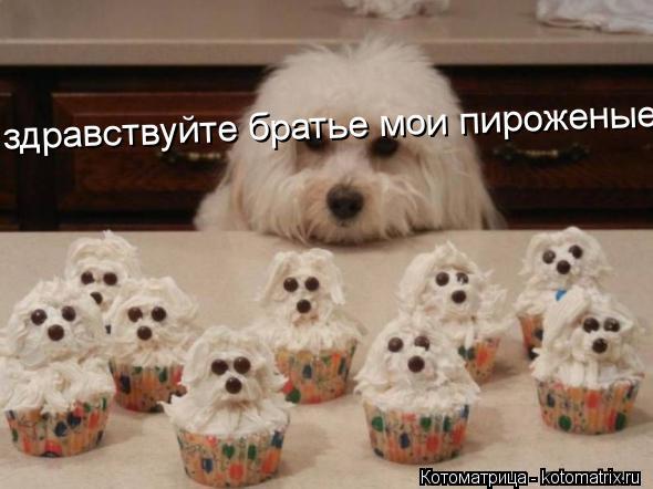 Котоматрица: здравствуйте братье мои пироженые