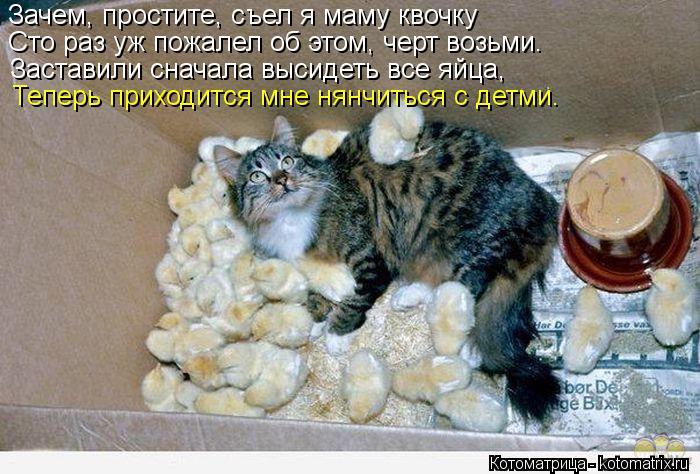 Котоматрица: Зачем, простите, съел я маму квочку Сто раз уж пожалел об этом, черт возьми. Заставили сначала высидеть все яйца, Теперь приходится мне нянчи