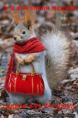 Котоматрица: а я вся такая модная отдала 444.44 ореха