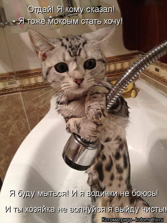 Котоматрица: Отдай! Я кому сказал!  Я тоже мокрым стать хочу!  И ты хозяйка не волнуйся я выйду чистым Я буду мыться! И я водички не боюсь!