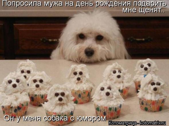 Котоматрица: Попросила мужа на день рождения подарить мне щенят.. Он у меня собака с юмором