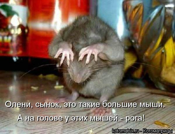 Котоматрица: А на голове у этих мышей - рога! Олени, сынок, это такие большие мыши.