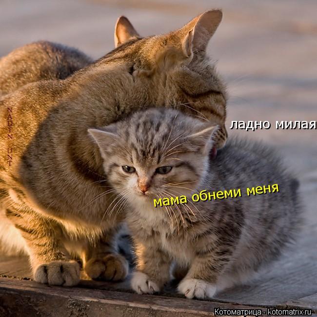 Котоматрица: ладно милая моя мама обнеми меня