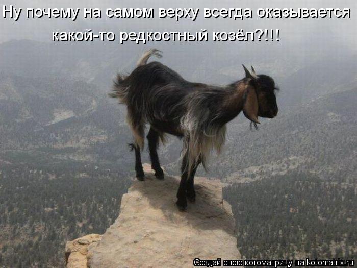 Котоматрица: Ну почему на самом верху всегда оказывается  какой-то редкостный козёл?!!!