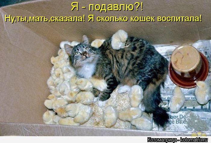 Котоматрица: Я - подавлю?! Ну,ты,мать,сказала! Я сколько кошек воспитала!