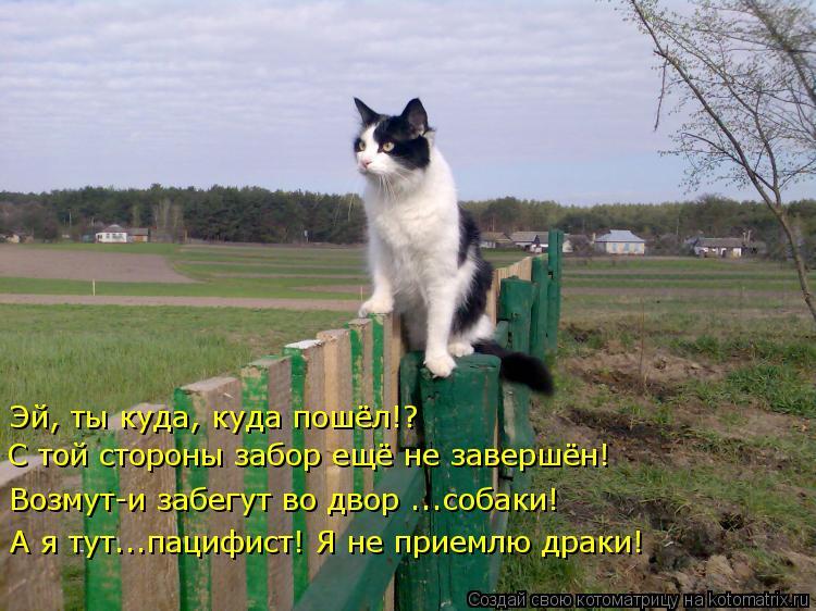 Котоматрица: Эй, ты куда, куда пошёл!?  С той стороны забор ещё не завершён! Возмут-и забегут во двор ...собаки! А я тут...пацифист! Я не приемлю драки!
