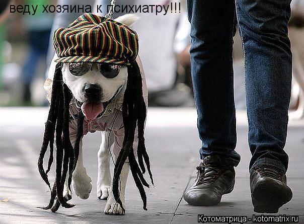 Котоматрица: веду хозяина к психиатру!!!