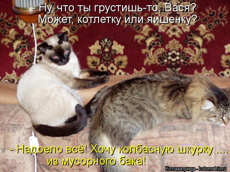 Котоматрица: - Ну, что ты грустишь-то, Вася? Может, котлетку или яишенку? - Надоело всё! Хочу колбасную шкурку ..... из мусорного бака!