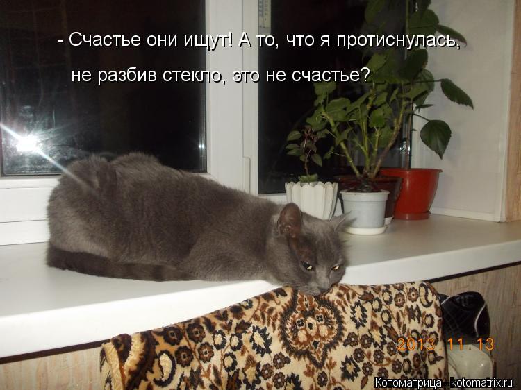 Котоматрица: не разбив стекло, это не счастье? - Счастье они ищут! А то, что я протиснулась,