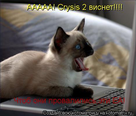 Котоматрица: ААААА! Crysis 2 виснет!!!! Чтоб они провалились,эти EA!