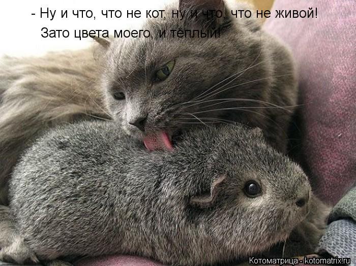Котоматрица: - Ну и что, что не кот, ну и что, что не живой! Зато цвета моего, и тёплый!