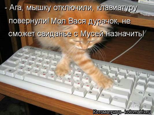 Котоматрица: - Ага, мышку отключили, клавиатуру  повернули! Мол Вася дурачок, не  сможет свиданье с Мусей назначить!