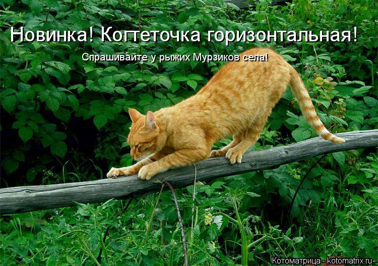 Котоматрица: Новинка! Когтеточка горизонтальная! Спрашивайте у рыжих Мурзиков села!