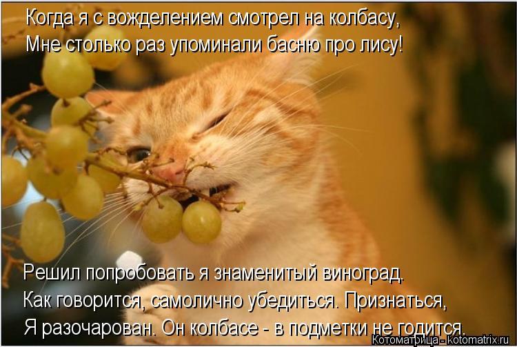 Котоматрица: Когда я с вожделением смотрел на колбасу, Мне столько раз упоминали басню про лису! Решил попробовать я знаменитый виноград.  Как говорится,