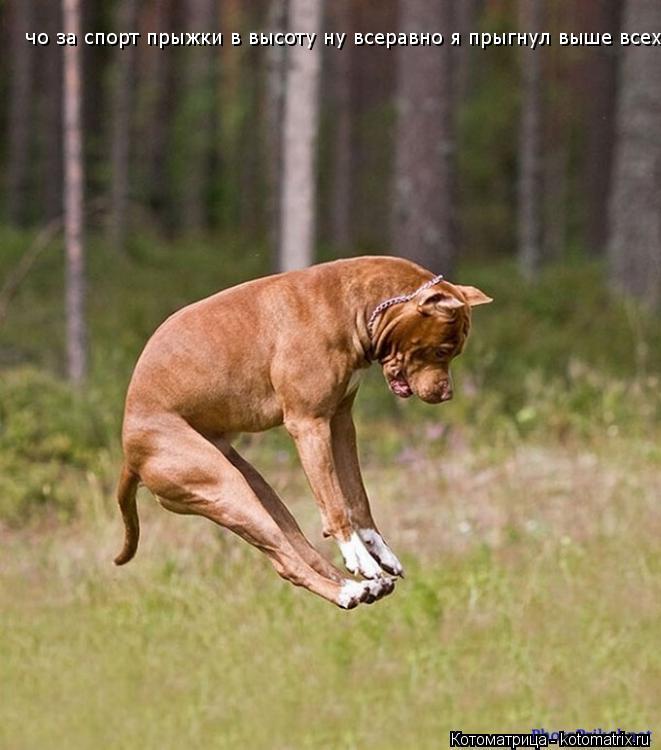 Котоматрица: чо за спорт прыжки в высоту ну всеравно я прыгнул выше всех