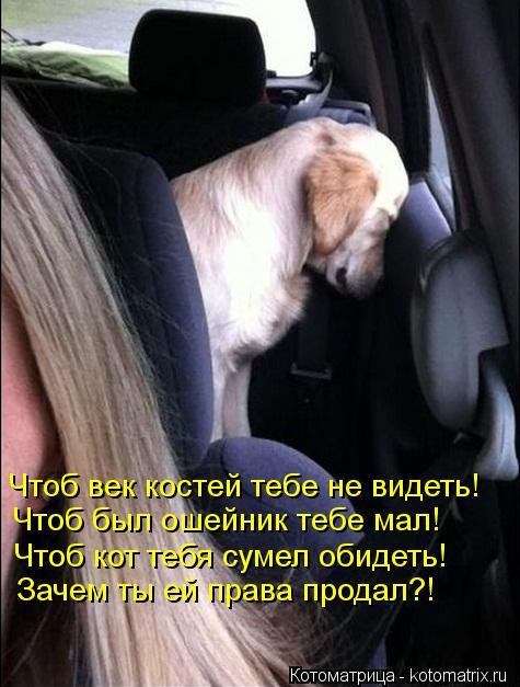 Котоматрица: Чтоб век костей тебе не видеть! Чтоб был ошейник тебе мал! Чтоб кот тебя сумел обидеть! Зачем ты ей права продал?!