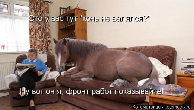"""Котоматрица: Это у вас тут """"конь не валялся?"""" Ну вот он я, фронт работ показывайте!"""
