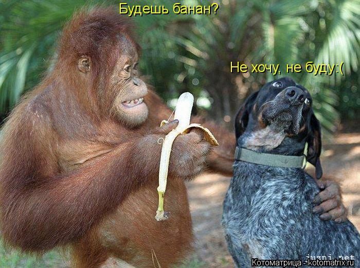 Котоматрица: Будешь банан? Не хочу, не буду:(