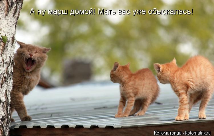 Котоматрица: А ну марш домой! Мать вас уже обыскалась!