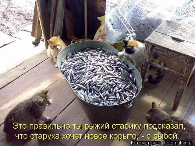 Котоматрица: Это правильно ты рыжий старику подсказал, что старуха хочет новое корыто, - с рыбой.