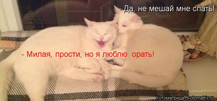 Котоматрица: - Да, не мешай мне спать! - Милая, прости, но я люблю  орать!
