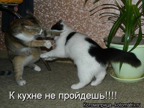 Котоматрица: К кухне не пройдешь!!!!
