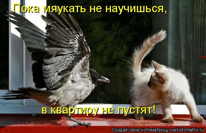 Котоматрица: Пока мяукать не научишься, в квартиру не пустят!