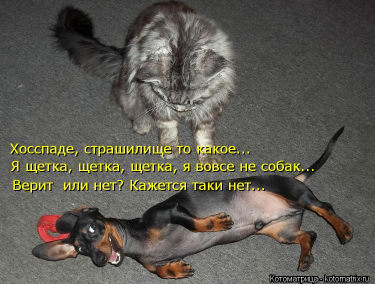 Котоматрица: Хосспаде, страшилище то какое... Я щетка, щетка, щетка, я вовсе не собак... Верит  или нет? Кажется таки нет...