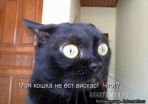 Котоматрица: Моя кошка не ест вискас!  Что!?