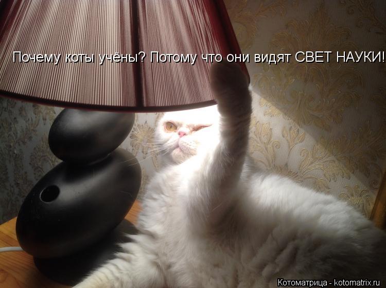 Котоматрица: Почему коты учёны? Потому что они видят СВЕТ НАУКИ!