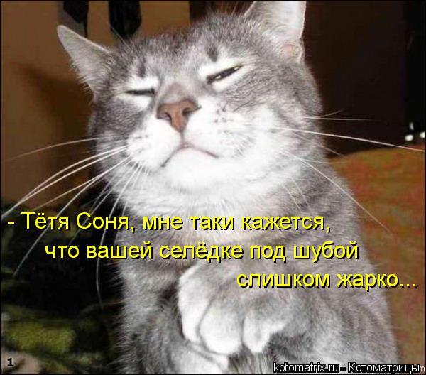 Котоматрица: - Тётя Соня, мне таки кажется, что вашей селёдке под шубой слишком жарко...