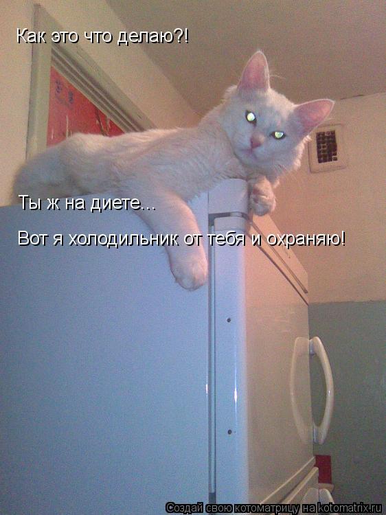 Котоматрица: Вот я холодильник от тебя и охраняю! Ты ж на диете... Как это что делаю?!