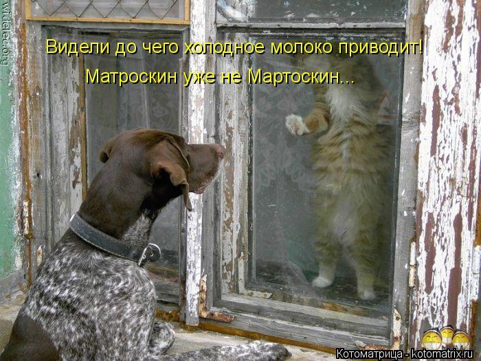 Котоматрица: Видели до чего холодное молоко приводит! Матроскин уже не Мартоскин...