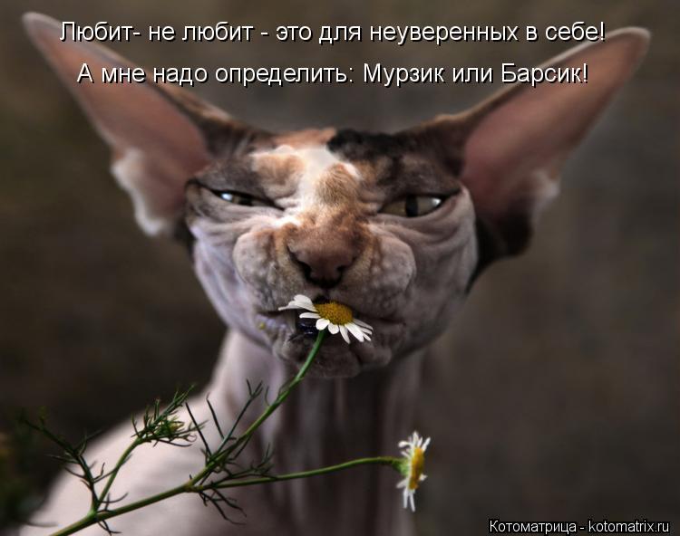 Котоматрица: Любит- не любит - это для неуверенных в себе! А мне надо определить: Мурзик или Барсик!