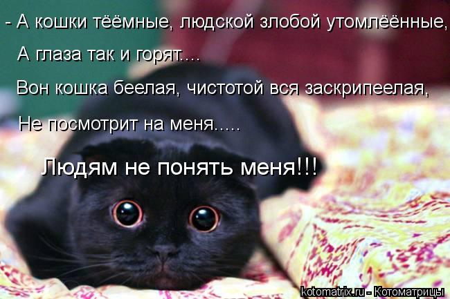 Котоматрица: - А кошки тёёмные, людской злобой утомлёённые, А глаза так и горят.... Вон кошка беелая, чистотой вся заскрипеелая, Не посмотрит на меня..... Люд
