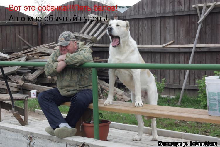 Котоматрица: -Вот это собачка!!!Пять балов! -А по мне обычный пудель!
