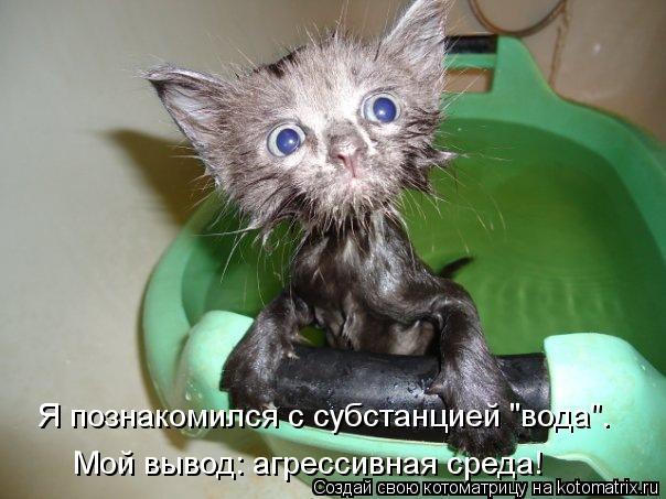 """Котоматрица: Я познакомился с субстанцией """"вода"""". Мой вывод: агрессивная среда!"""