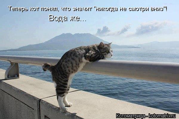 """Котоматрица: Теперь кот понял, что значит """"никогда не смотри вниз""""! Вода же..."""