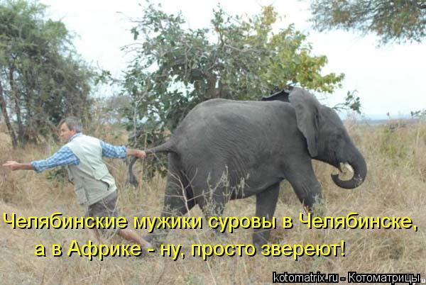 Котоматрица: Челябинские мужики суровы в Челябинске, а в Африке  yeпросто звереют! а в Африке - нy, просто звереют!