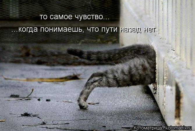 Котоматрица: то самое чувство... ...когда понимаешь, что пути назад нет