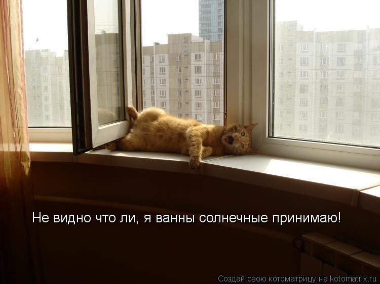 Котоматрица: Не видно что ли, я ванны солнечные принимаю!