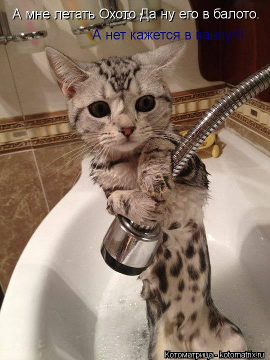 Котоматрица: А мне летать Охото Да ну его в балото.  А нет кажется в ванну!!!