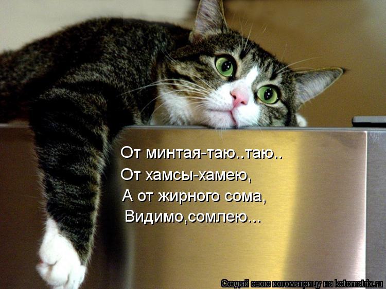 Котоматрица: От минтая-таю..таю.. От минтая-таю..таю.. От хамсы-хамею, А от жирного сома, Видимо,сомлею...