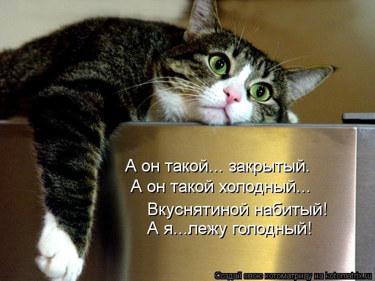 Котоматрица: А он такой... закрытый. А он такой холодный... Вкуснятиной набитый! А я...лежу голодный!