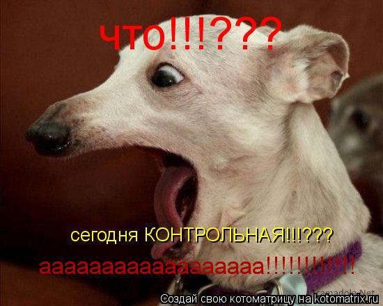 Котоматрица: что!!!??? сегодня КОНТРОЛЬНАЯ!!!??? аааааааааааааааааа!!!!!!!!!!!!