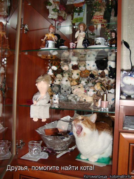 Котоматрица: Друзья, помогите найти кота!