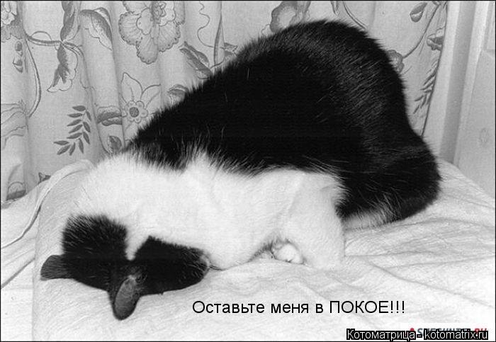 Котоматрица: Оставьте меня в ПОКОЕ!!!