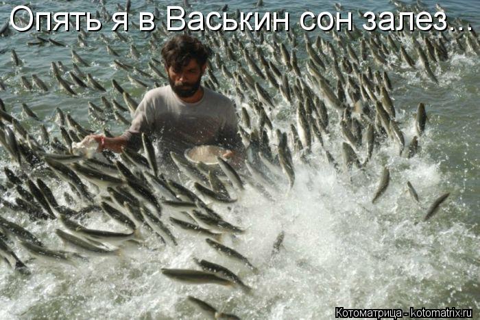 Котоматрица: Опять я в Васькин сон залез...