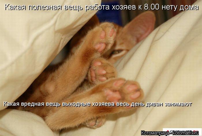 Котоматрица: Какая полезная вещь работа хозяев к 8.00 нету дома Какая вредная вещь выходные хозяева весь день диван занимают